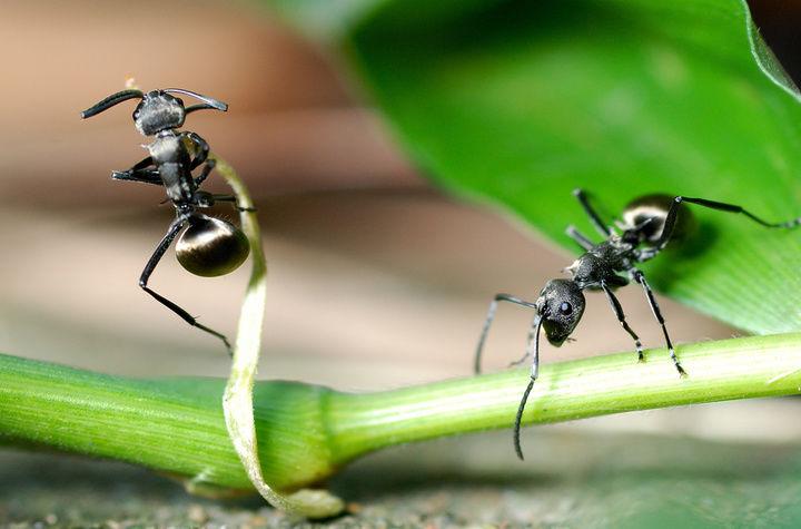 蚂蚁的工蚁