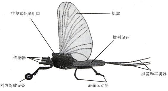 昆虫间谍飞机