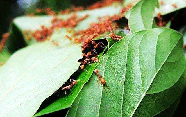 红蚂蚁远征