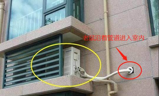 80%的老鼠进入室内都是通过空调洞口