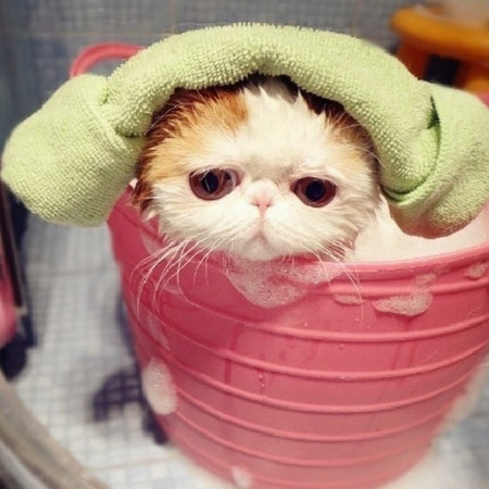 给宠物洗澡可清除其身上的跳蚤