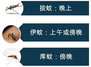 处理蚊子合适的时间