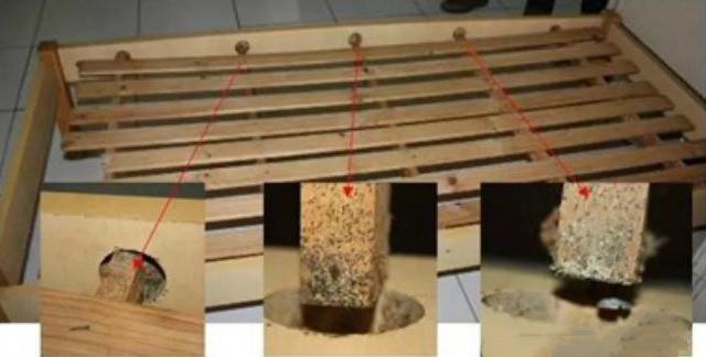 床板孔洞臭虫检查