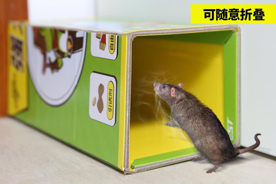虫虫战队粘鼠板折叠成管道口可以增加捕获老鼠的几率