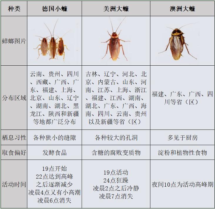 家庭蟑螂种类