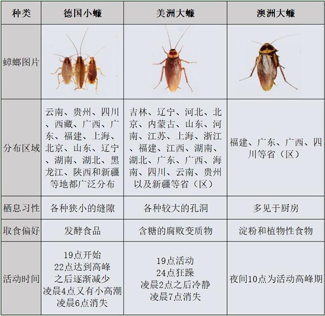 蟑螂不同种类