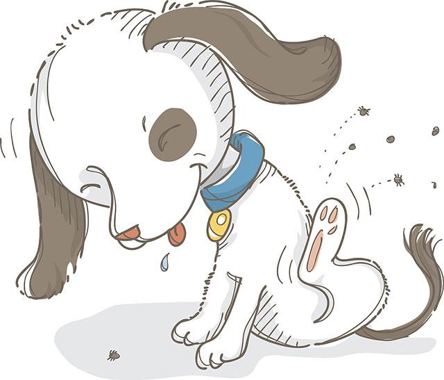 狗狗身上感染了跳蚤