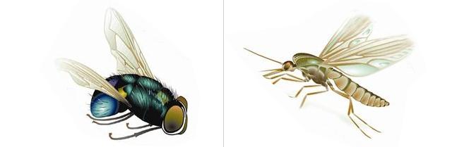 苍蝇和蚊子
