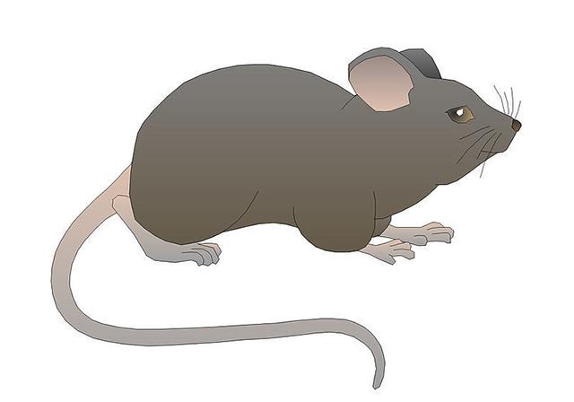 餐营业鼠害防治的主要措施