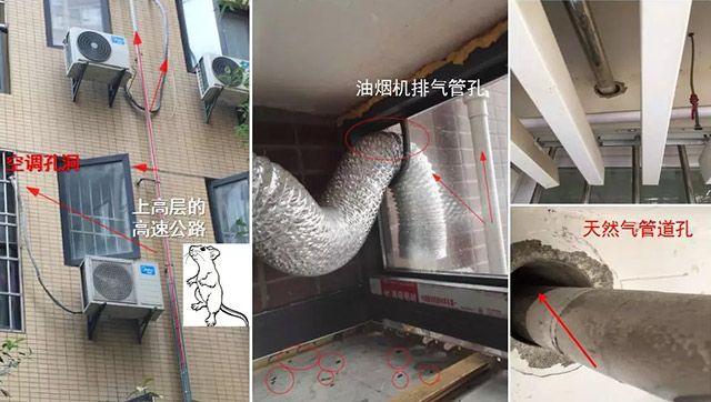 鼠类侵入室内途径