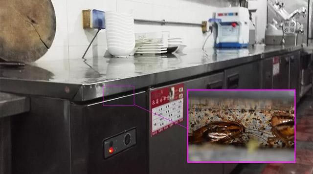 平冷工作台的缝隙是喜欢的蟑螂藏身处