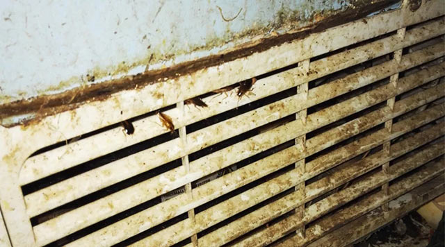 """冰箱背后的压缩机的""""栅栏""""缝隙是蟑螂的藏身处"""