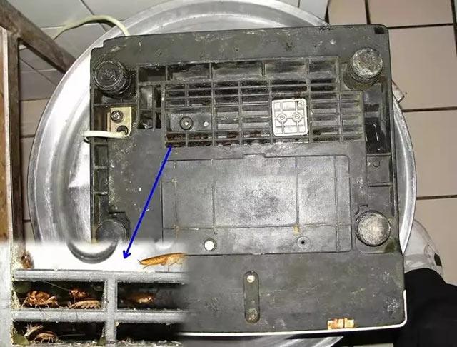 电子称背面是蟑螂的藏身处