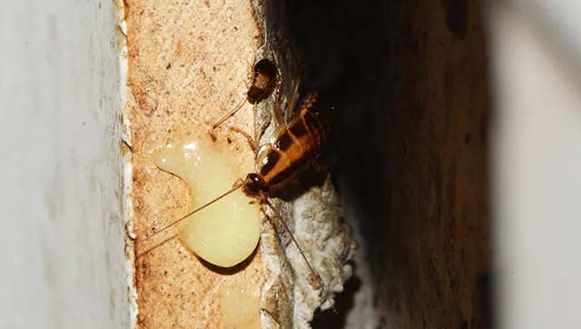 墙洞蟑螂藏身处