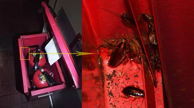 灭火器箱是蟑螂藏身处