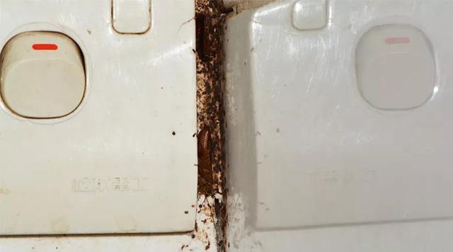开关是蟑螂藏身处