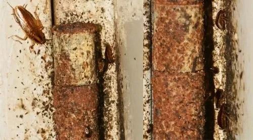 门合页,铰链蟑螂藏身处