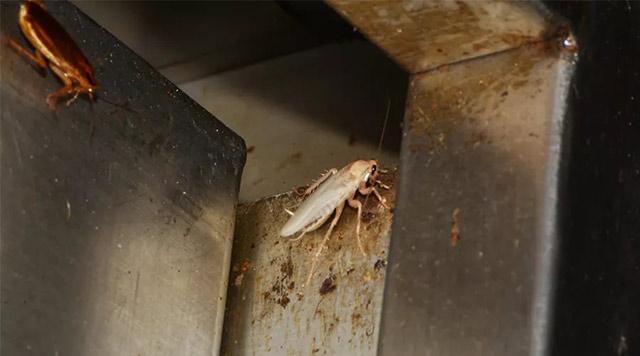 储物柜蟑螂藏身处