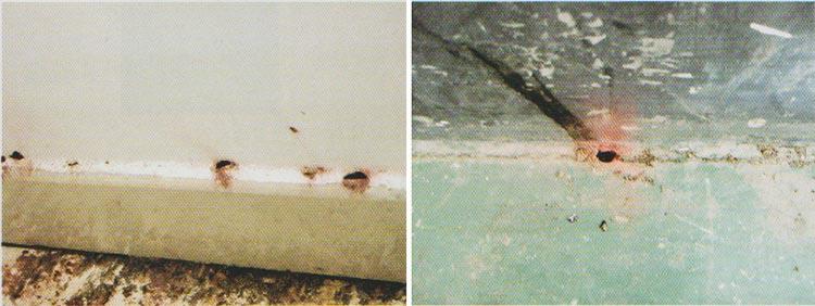 白蚁分飞孔