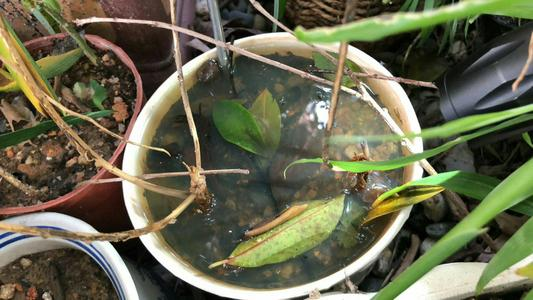 废弃盆栽内的积水