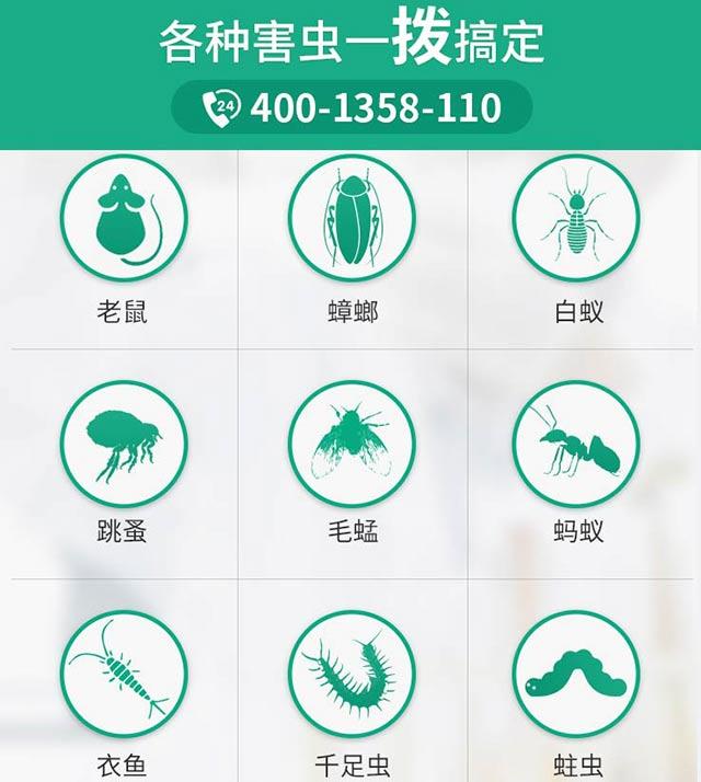 虫虫战队专业虫害防治公司