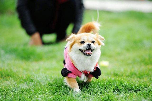 宠物狗需要定期驱虫吗
