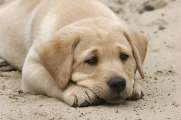 狗狗驱虫用什么驱虫药