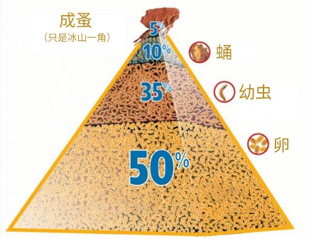 有名的成蚤金字塔