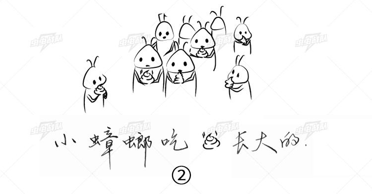 小蟑螂在窝内吃大蟑螂粪便长大的