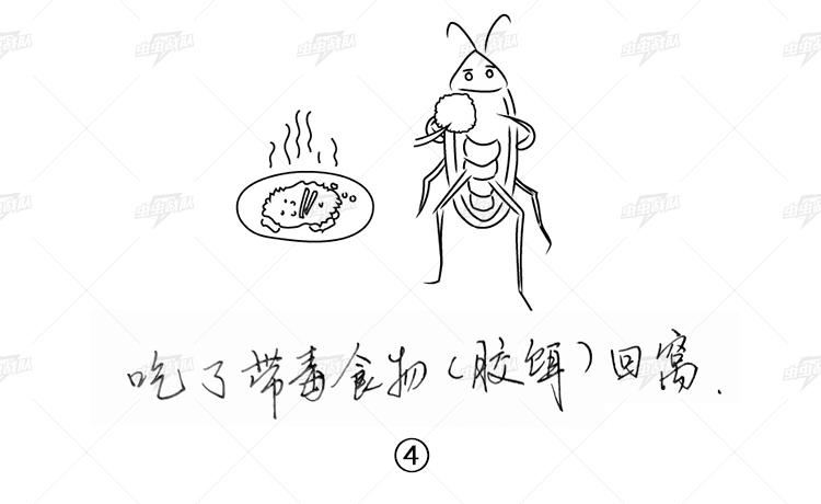 让外出觅食的蟑螂吃了带毒的胶饵回窝