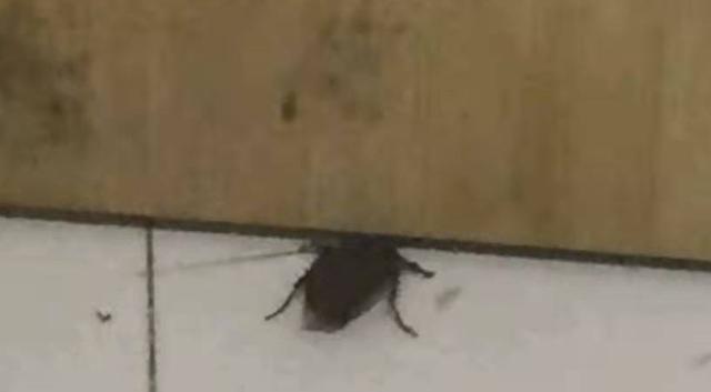 蟑螂通过门缝爬进室内