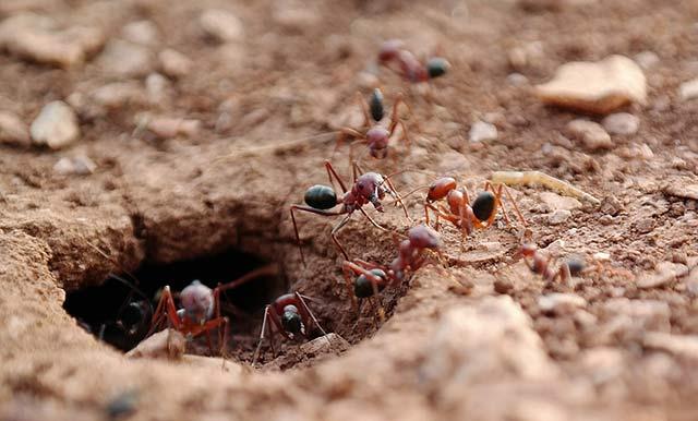 土壤中的蚂蚁巢穴