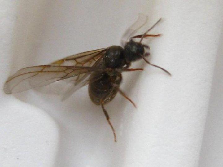 蚂蚁繁殖蚁