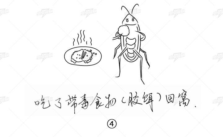 胶饵灭蟑螂原理