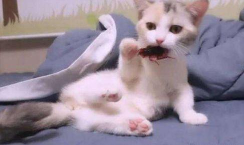 猫是蟑螂天敌